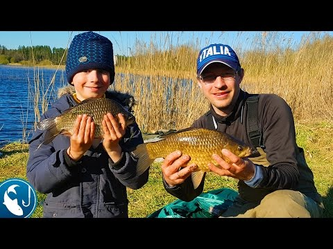 Большие караси на фидер в мае на пруду Ловля карася на метод, весенний карась   Рыбалка с Родионом