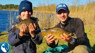 Большие караси на фидер в мае на пруду Ловля карася на метод, весенний карась | Рыбалка с Родионом