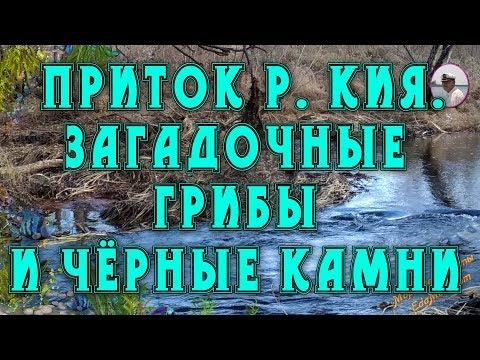 Хабаровск. Приток р. Кия. Загадочные-грибы и чёрные камни