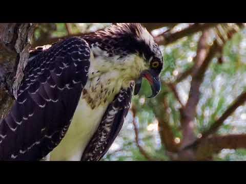 Wild beauty @ Veterans Park on Okaloosa Island
