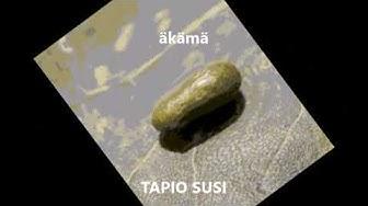 äkämä - TAPIO SUSI