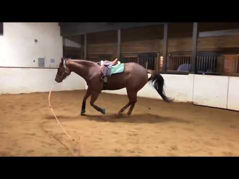 Slow Motion Horse Gaits