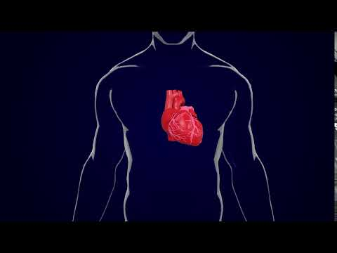human body&heart