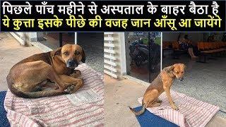 पिछले पाँच महीने से अस्पताल के बाहर बैठा है ये कुत्ता इसके पीछे की वजह जानकर आँसू आ जायेंगे