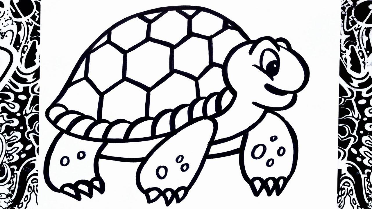 como dibujar una tortuga | how to draw turtle - YouTube