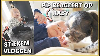 LUXY VLOGT STiEKEM & PiP REAGEERT OP HUiLDENDE BABY 😍   Bellinga Vlog #2220