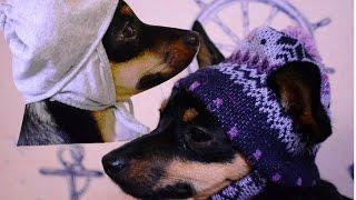 Одежда для собак своими руками! Вязаная одежда для собак! Шапка для собак!