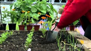 Planting Marigolds As Companion Plants