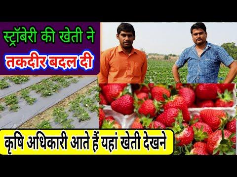 स्ट्रॉबेरी की खेती ने बदली किस्मत Strawberry Farming युवा प्रगतिशील किसान - Agritech Guruji