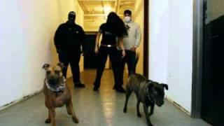 Brindle Brickheads - Caninus