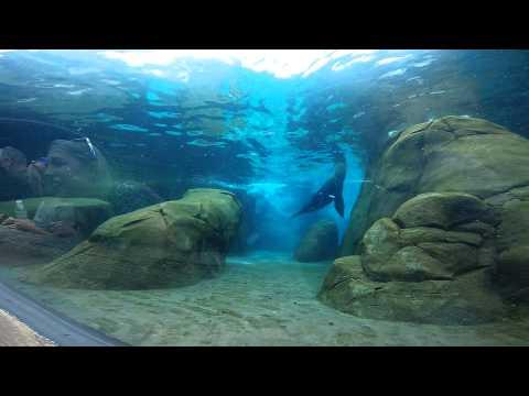 Saint Louis Zoo // GoPro Video