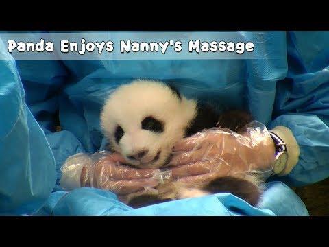Panda Enjoys Nanny's Massage | IPanda