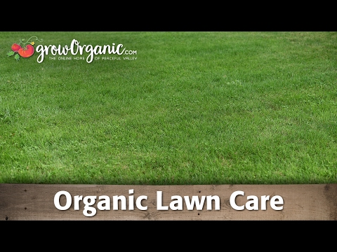 How to Grow and Maintain a Lush, Full Lawn Organically