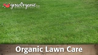 How Grow And Maintain Lush Full Lawn Organi