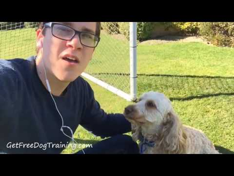 doggy-dan's-online-dog-trainer-review---does-it-work?