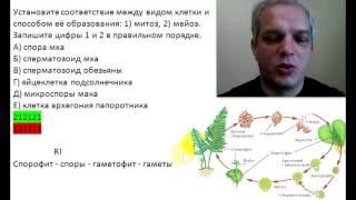 Гаметы растений митозом, гаметы животных и споры растений - мейозом