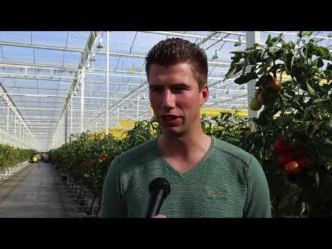 Tuinen bij... Schenkeveld Tomaten