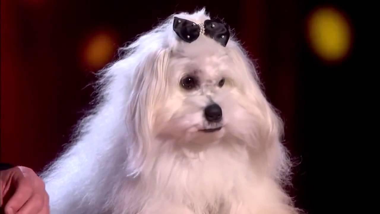 talking dog britains got talent