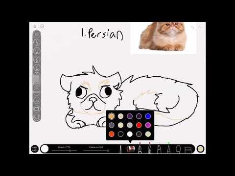 Drawing cat breeds #1 Persian