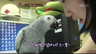 TV동물농장(571회)_02