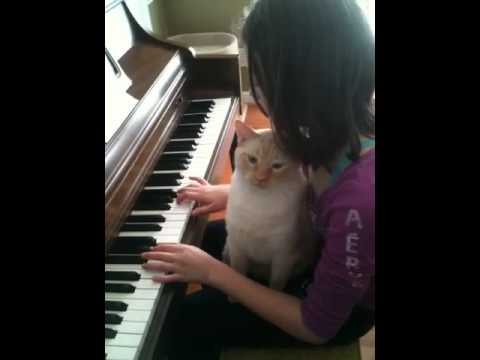 Cat loves Fur Elise on Piano