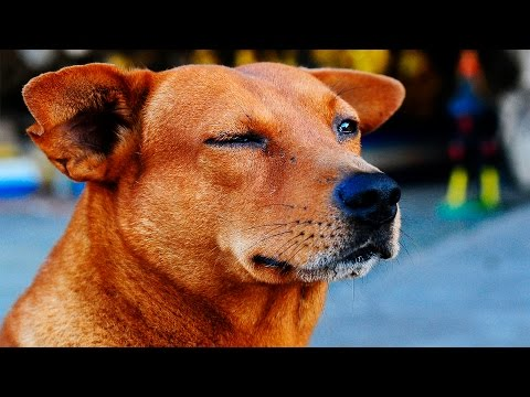 Dogs Winking #86