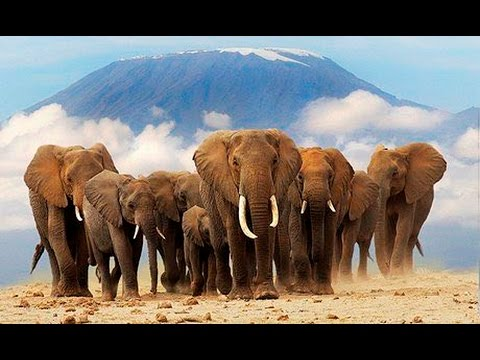 Top 10 biggest Elephant in the world. - YouTube