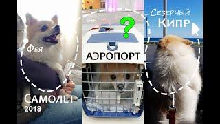 Приключения Феи. Собака в самолёте. Собака в аэропорту. Как это было? - октябрь 2018