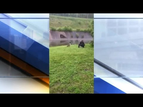 Cincinnati police officers save baby goose from balloon