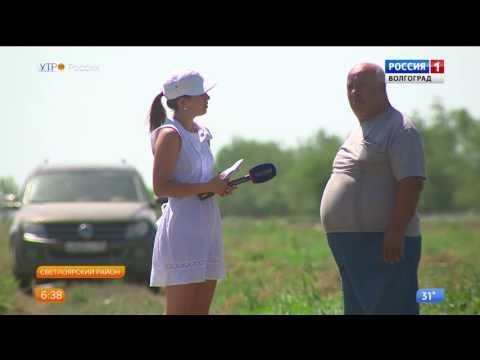 Вопрос: Где растут маслята в Волгоградской области и Волгограде Какие места?