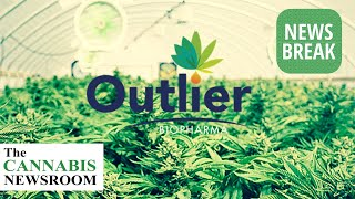 Outlier BioPharma Set to Open Jamaica's Largest Extraction Facility