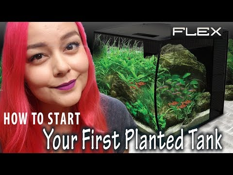 Beginners Guide to Planted Tanks | Fluval Flex Aquarium Setup