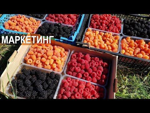 ЯГОДНЫЙ БИЗНЕС. СБОР, МАРКЕТИНГ, СБЫТ. Тульская ягодная компания