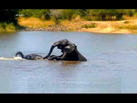 Порно Слон - редкое секс видео и фото качаем бесплатно