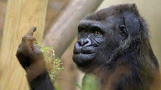 annoying monkeys funny animals compilation