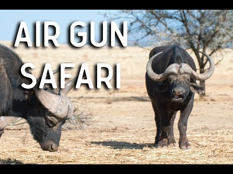 Air Gun Safari - Big Bore Air Rifle in Africa