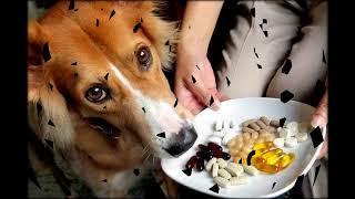 витамин в12 для животных
