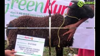 Kambing Qurban Online, Harga Sapi Qurban 2015 Bandung, Qurban Online Jakarta Green Kurban