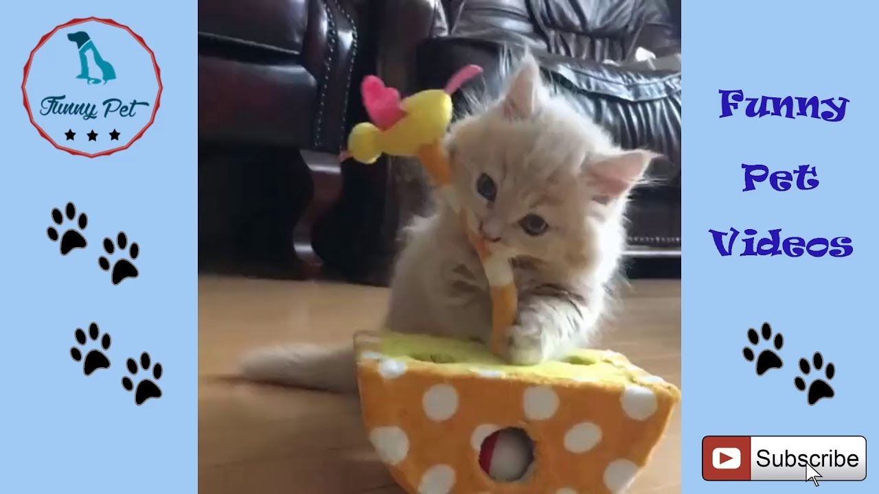 August 2018 Cat Videos For Kids Funny And Cute Cat Videos For