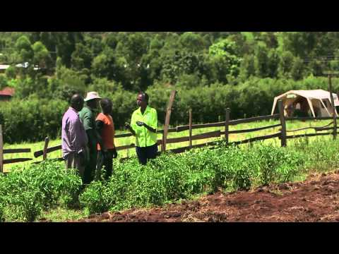 Shamba Shape Up Sn 05 - Ep 19 Tomatoes, Capsicum, Climate Smart Agriculture (Swahili)