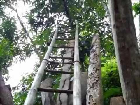 Bohol home made ladder