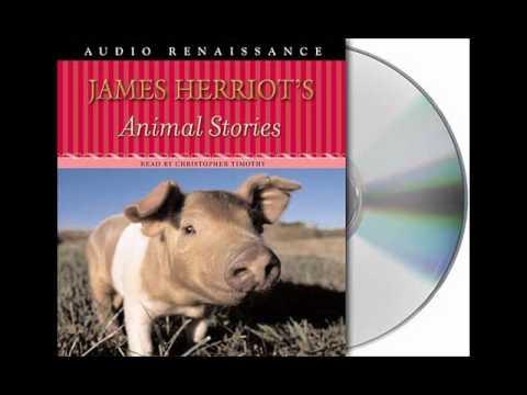 James Herriot's Animal Stories--Audiobook Excerpt