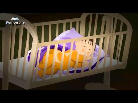Tuyển tập nhạc cho baby giúp trẻ thông minh - SocNauKids.com