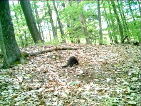 Fisher Cat - YouTube