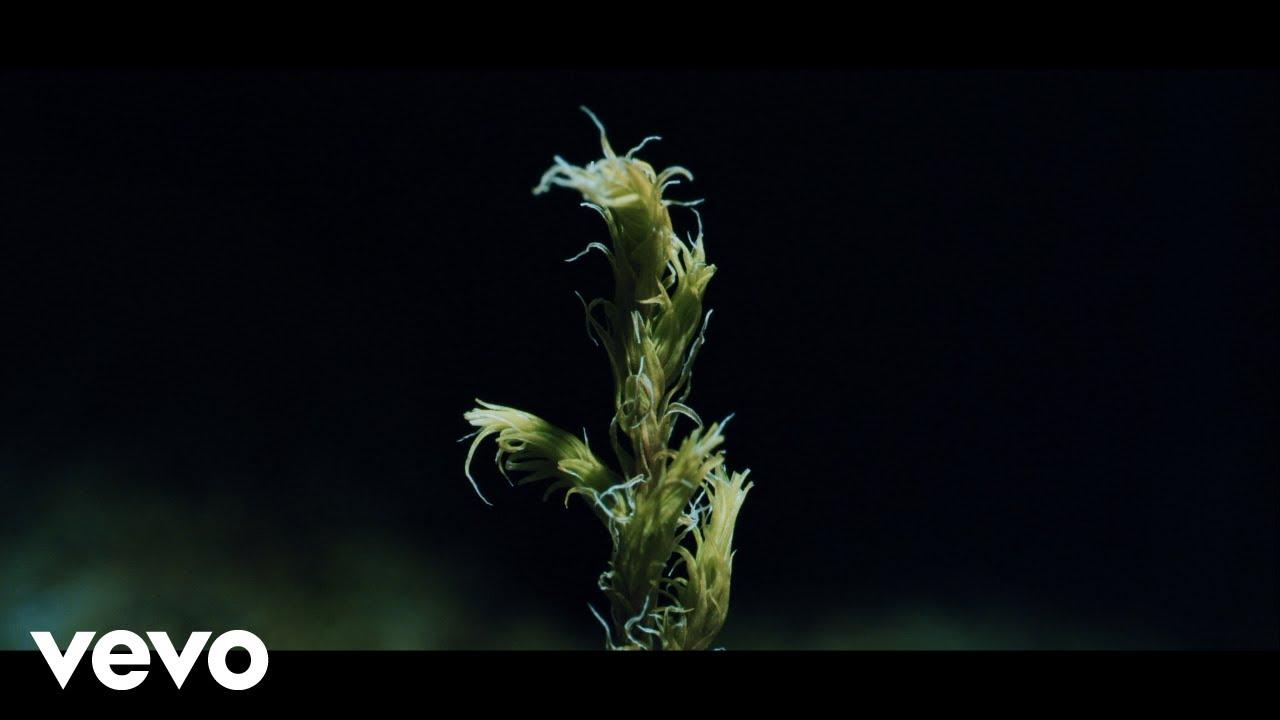 Download Ólafur Arnalds - New Grass