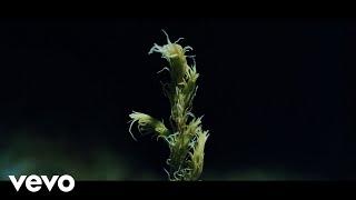 Ólafur Arnalds - New Grass