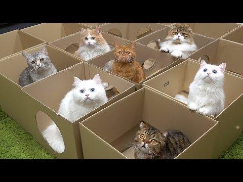 초대형 놀이터에 고양이들이 난리가 났어요