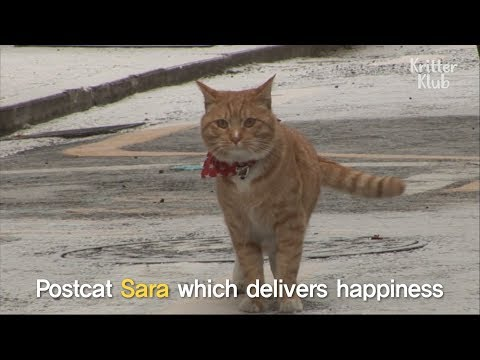 Stray Cat Delivers Mail | SBS Animal
