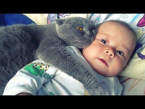 【감동】 고양이가 아기를