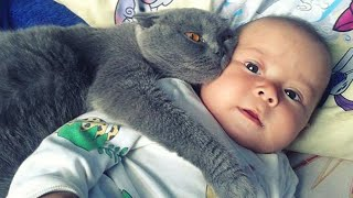 【감동】 고양이가 아기를 위험으로부터 보호합니다 2020 😸👶